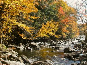 politique-forestiere-riviere